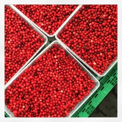 Lingonbberries for sale
